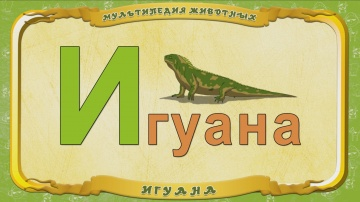 Мультипедия животных. Буква И - Игуана