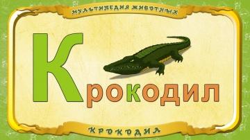 Мультипедия животных. Буква К - Крокодил