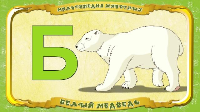 Мультипедия животных - Буква Б - Белый медведь