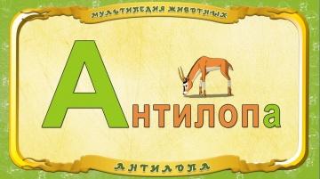 Мультипедия животных - Буква А - Антилопа