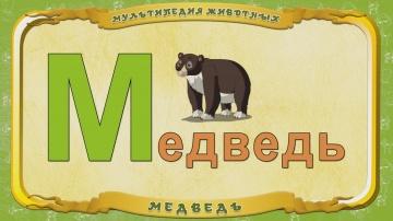 Мультипедия животных. Буква М - Медведь