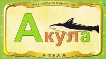 Мультипедия животных - Буква А - Акула