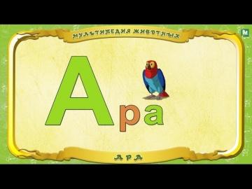 Мультипедия животных - Буква А - Ара.