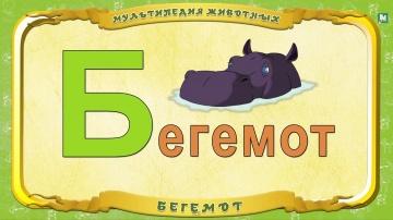 Мультипедия животных - Буква Б - Бегемот