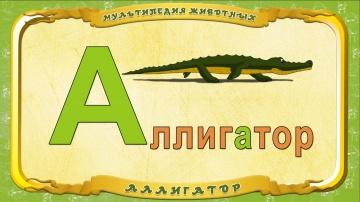 Мультипедия животных - Буква А - Аллигатор